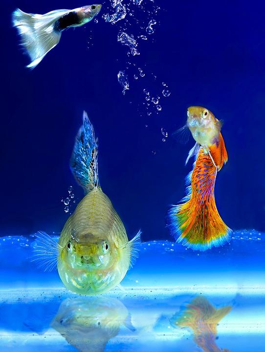 aquarium à proximité autour de moi