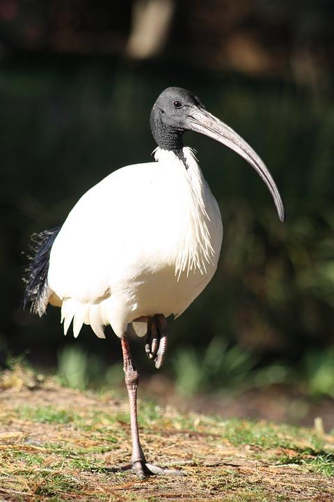 ibis à proximité autour de moi